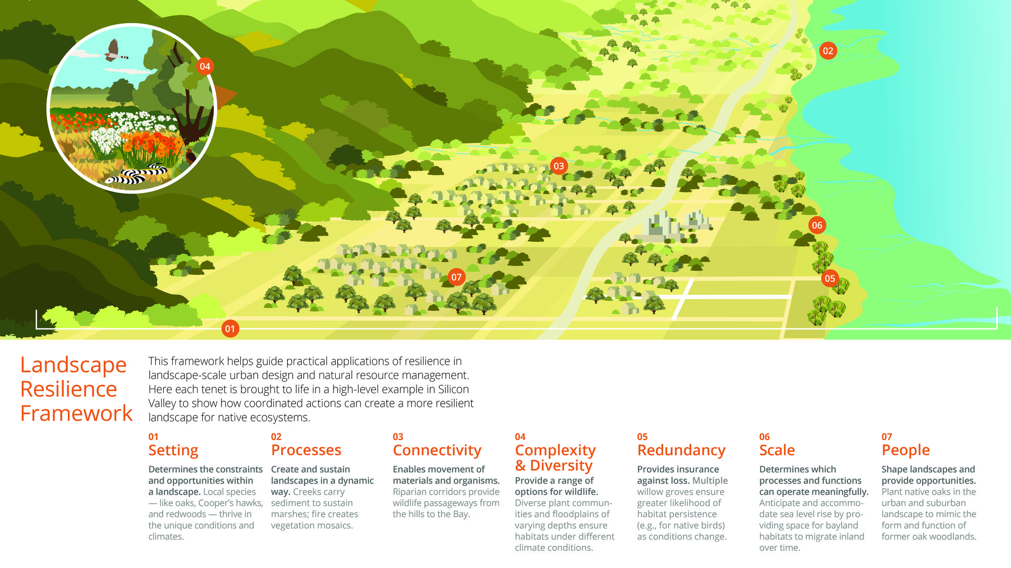 Ecology Tenets Infographic
