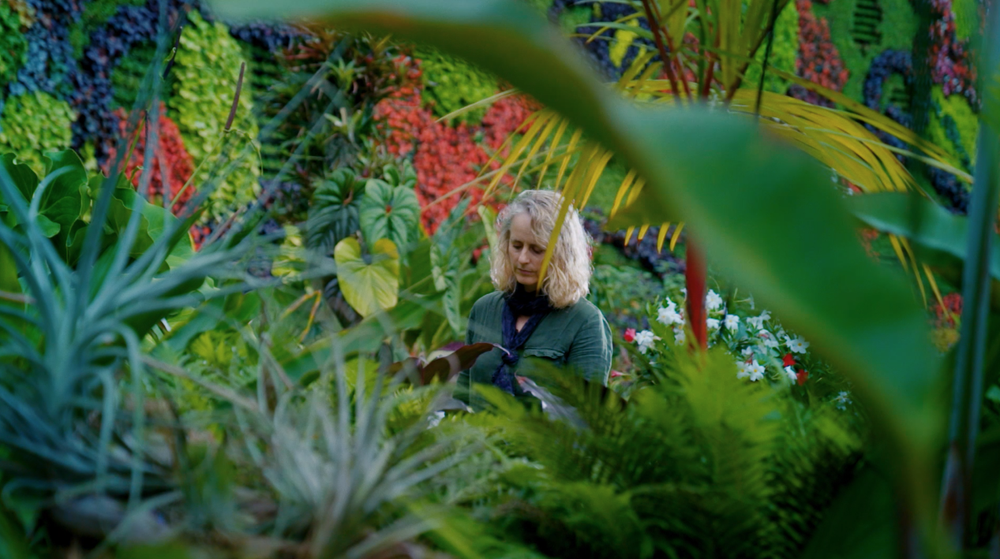 A video about Infinite Herbarium by Caroline Rothwell, a web application and art installation that helps people use machine-learning to create art and learn more about the plants around them