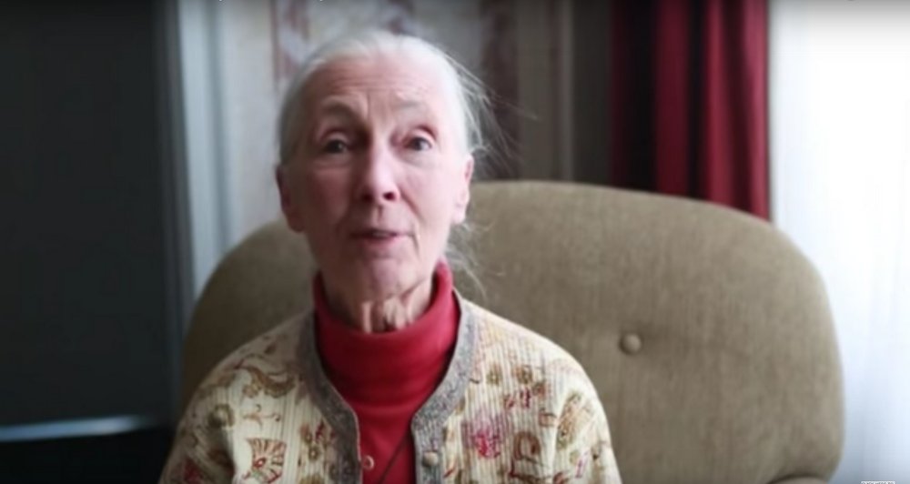 Dr. Jane Goodall - Earth Day 2015 - Google Doodle Video