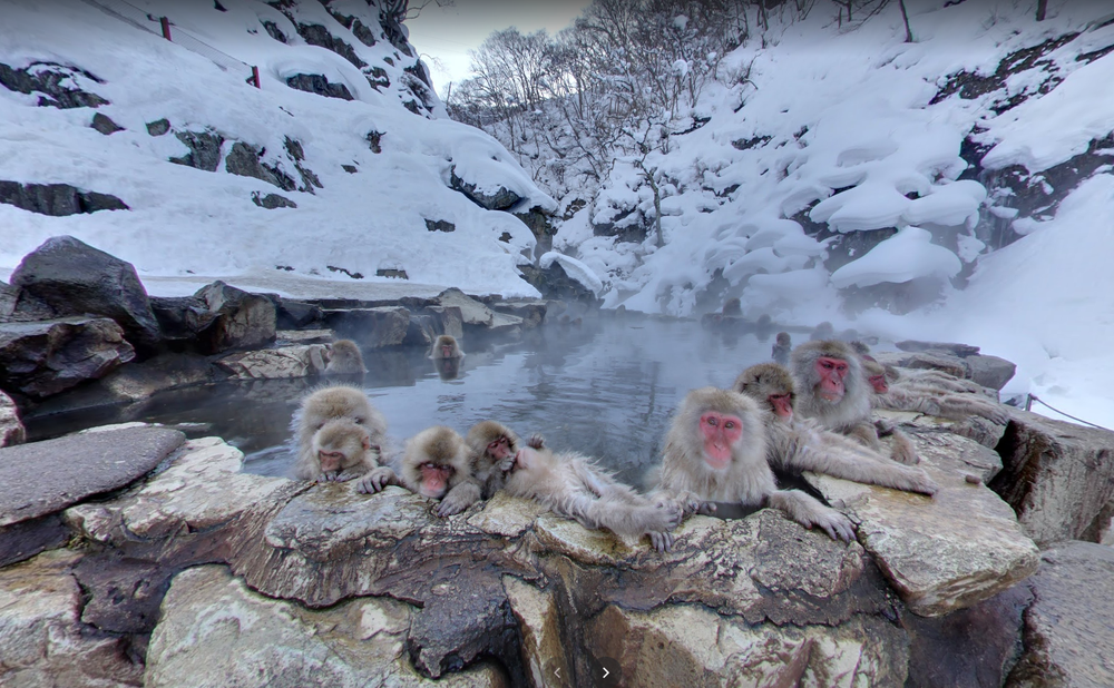 Image showing monkeys in a rock pool hot spring surrounded by snow.