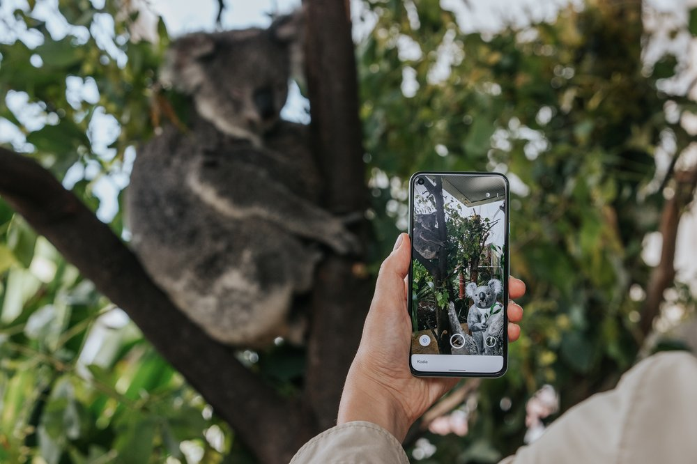 Koala in AR search