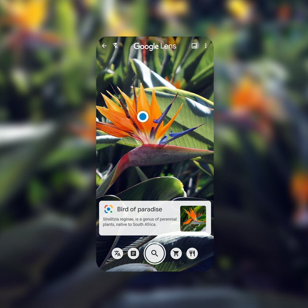 Lens_Identify_Bird_of_Paradise@2x.png