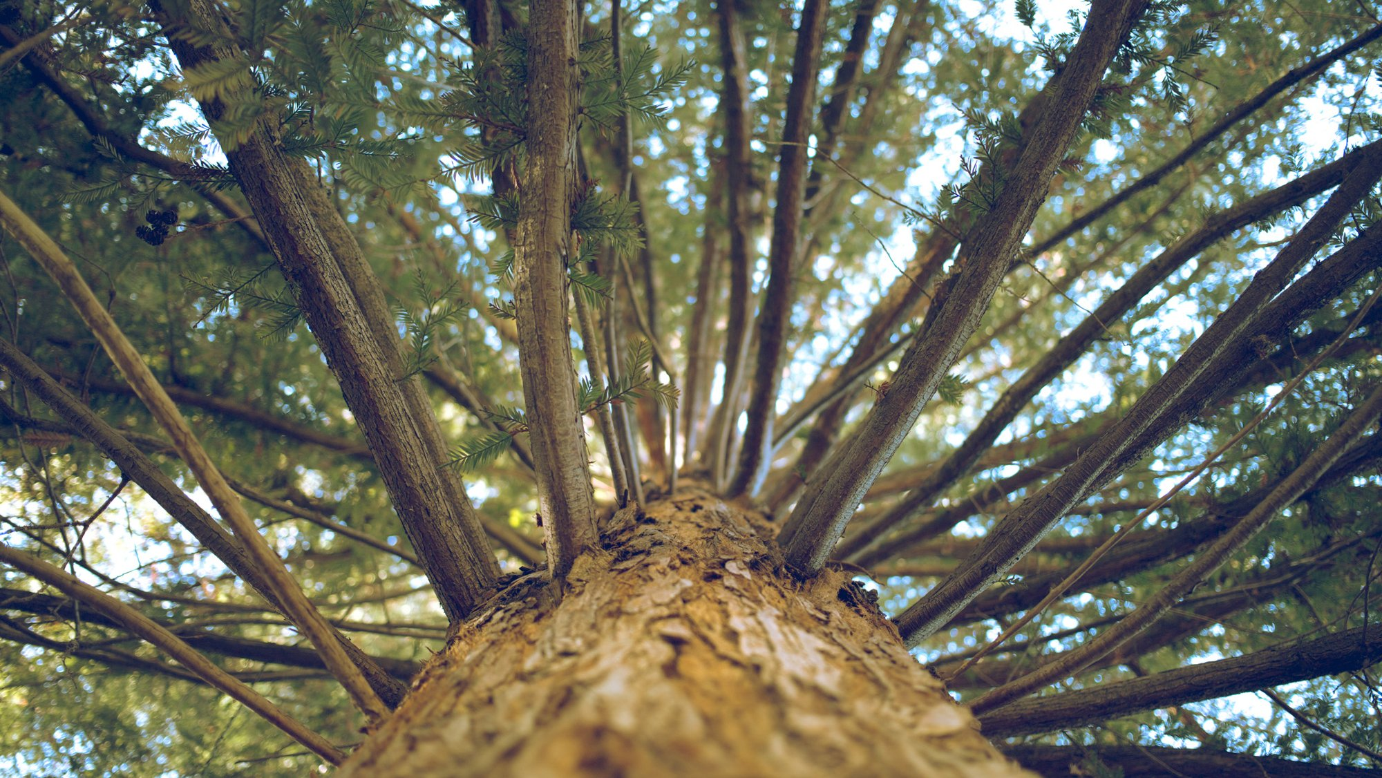 Tree photo Leo Deegan
