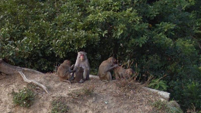 Monkey_view_4.png