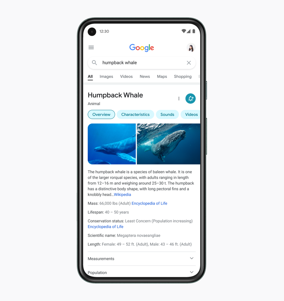 Image showing a mock-up of a Pixel phone with Google Search pulled up on the screen. The search results show answers about Humpback whales, including two images.