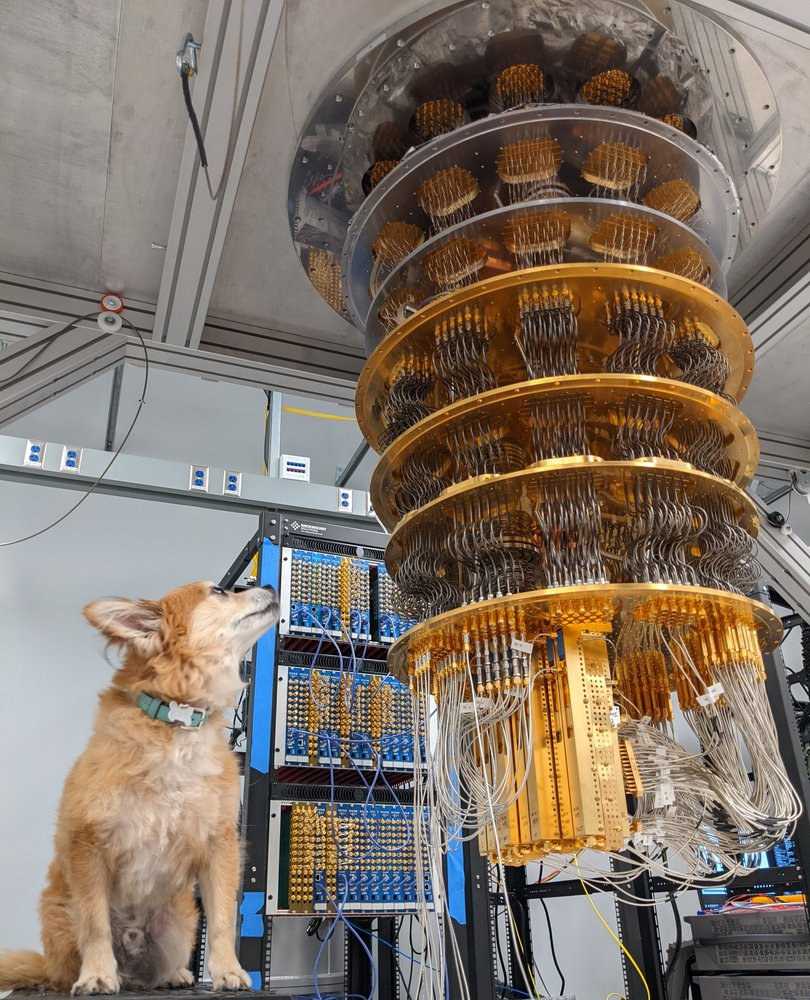 A small dog with light brown fur looks up at a quantum computer