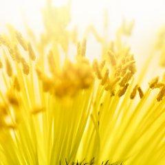 Pollen Count-hero.jpg