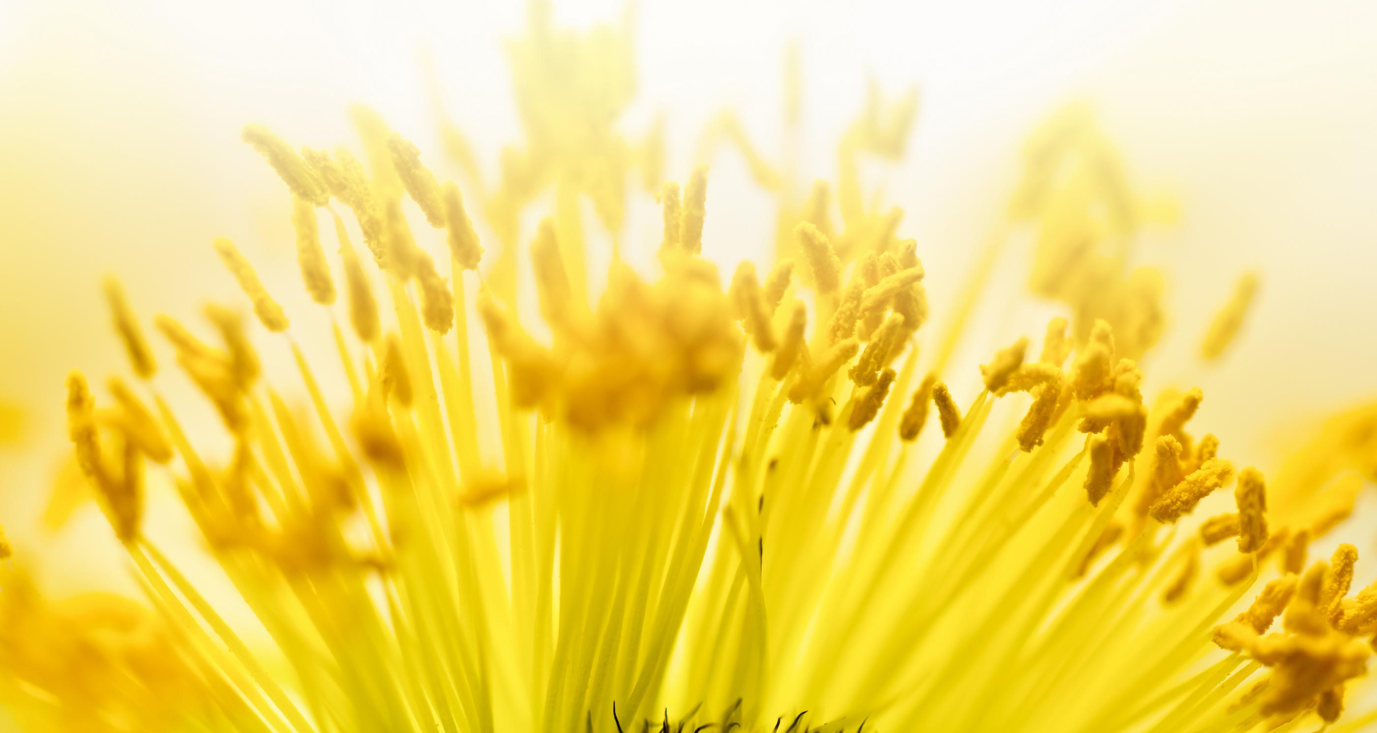 Image result for pollen