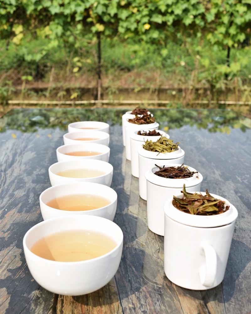 Tea tasting Udyan