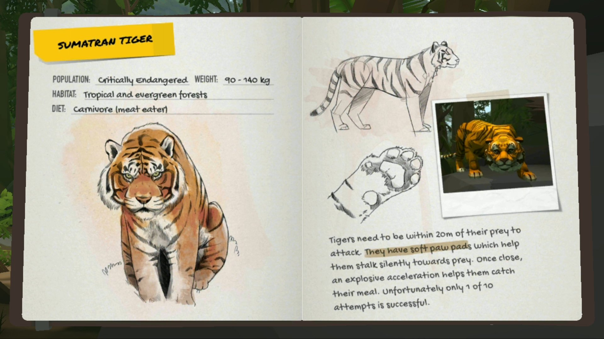 Into the Wild - Sumatran tiger card