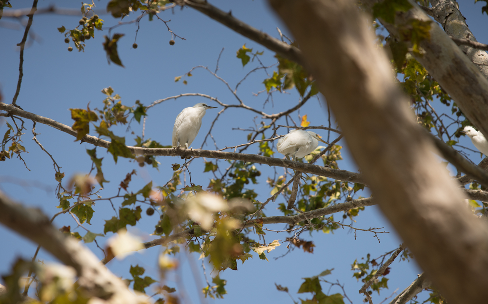 Every summer, Google's campus is for the birds