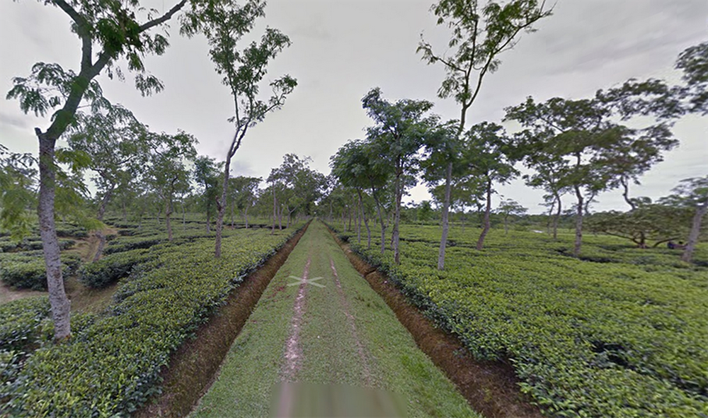 bangladesh tea research institute.png