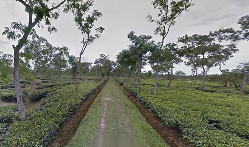 bangladesh tea research institute.png