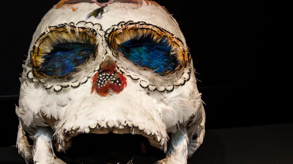 craneo skull.png
