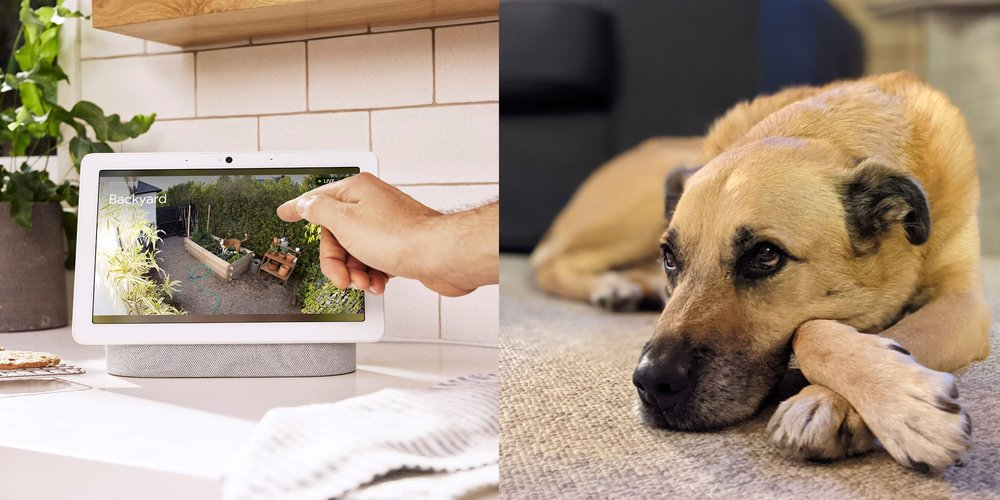 Nest Cam vs. camera photo of dog