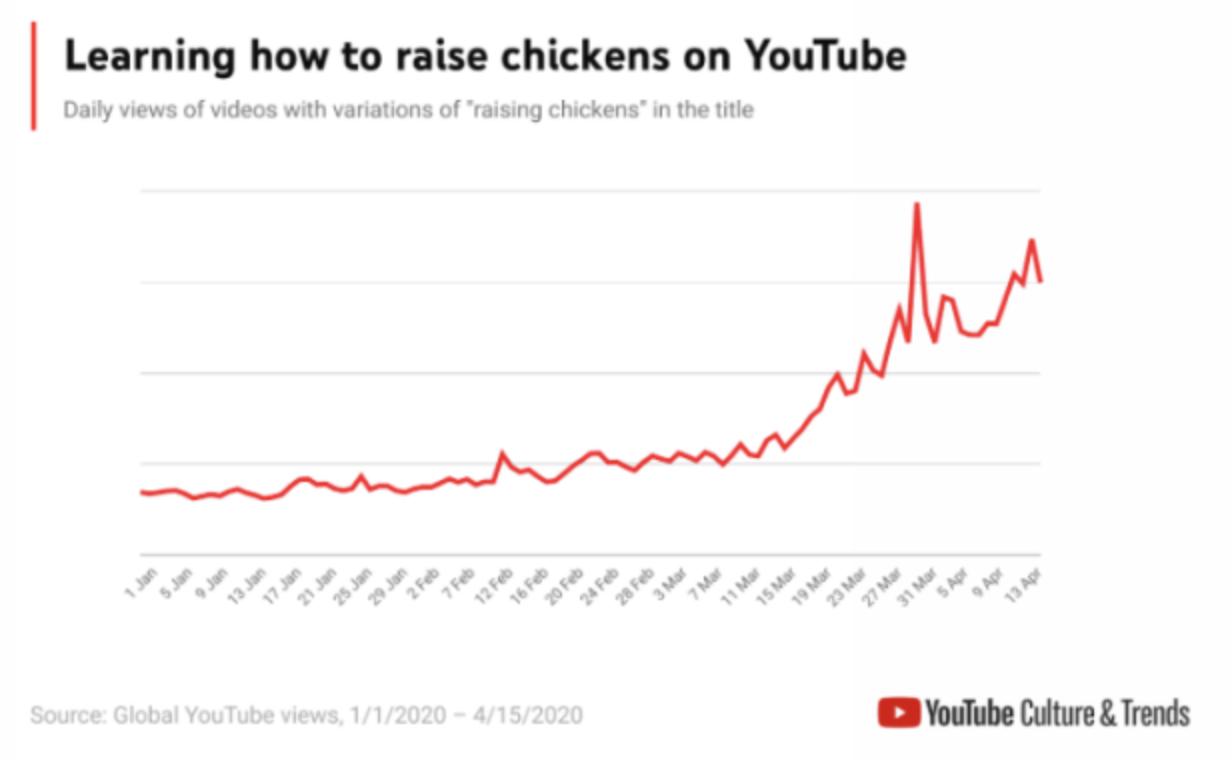 Imagem sobre galinhas