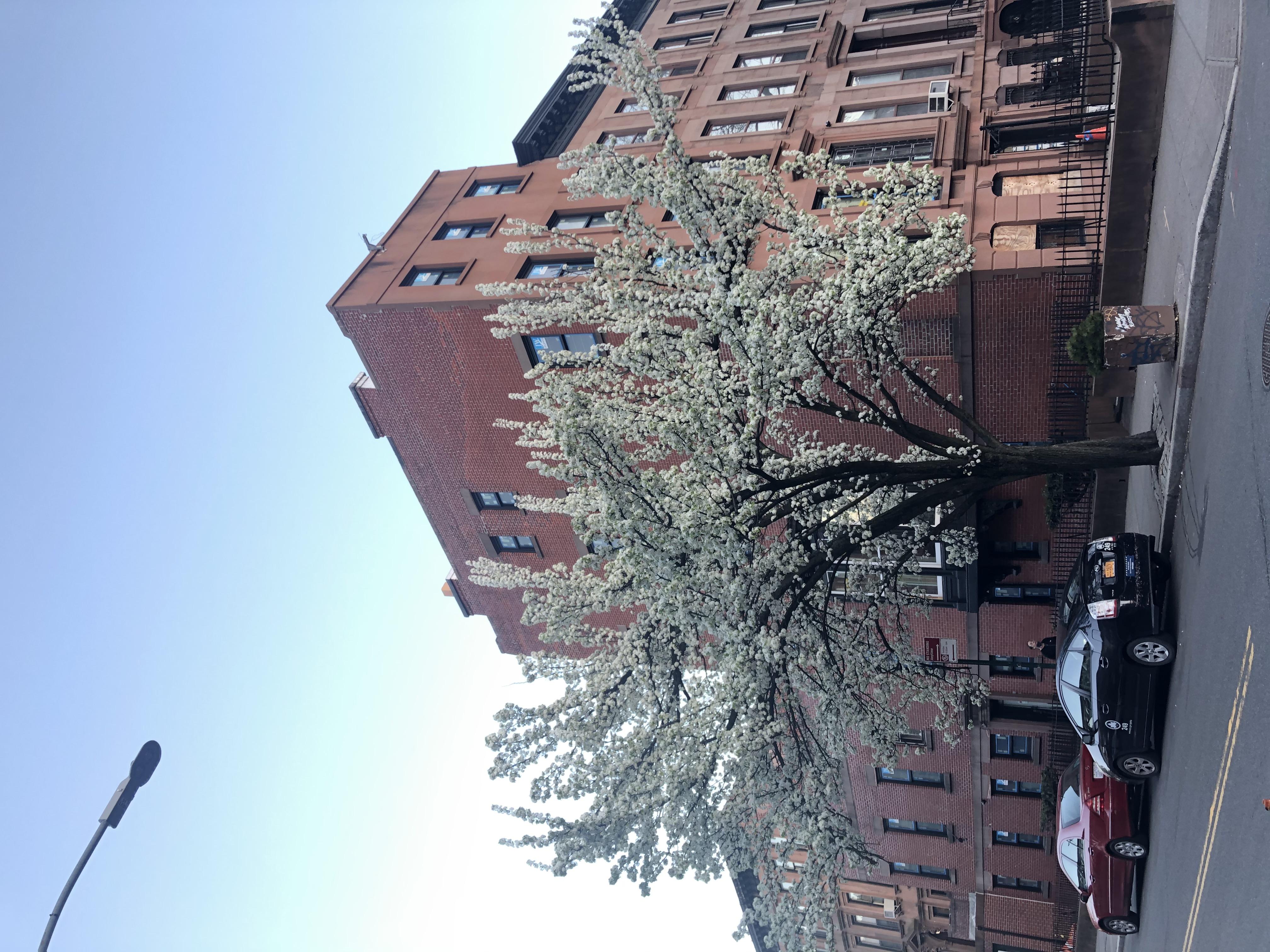 It's spring again in Brooklyn.