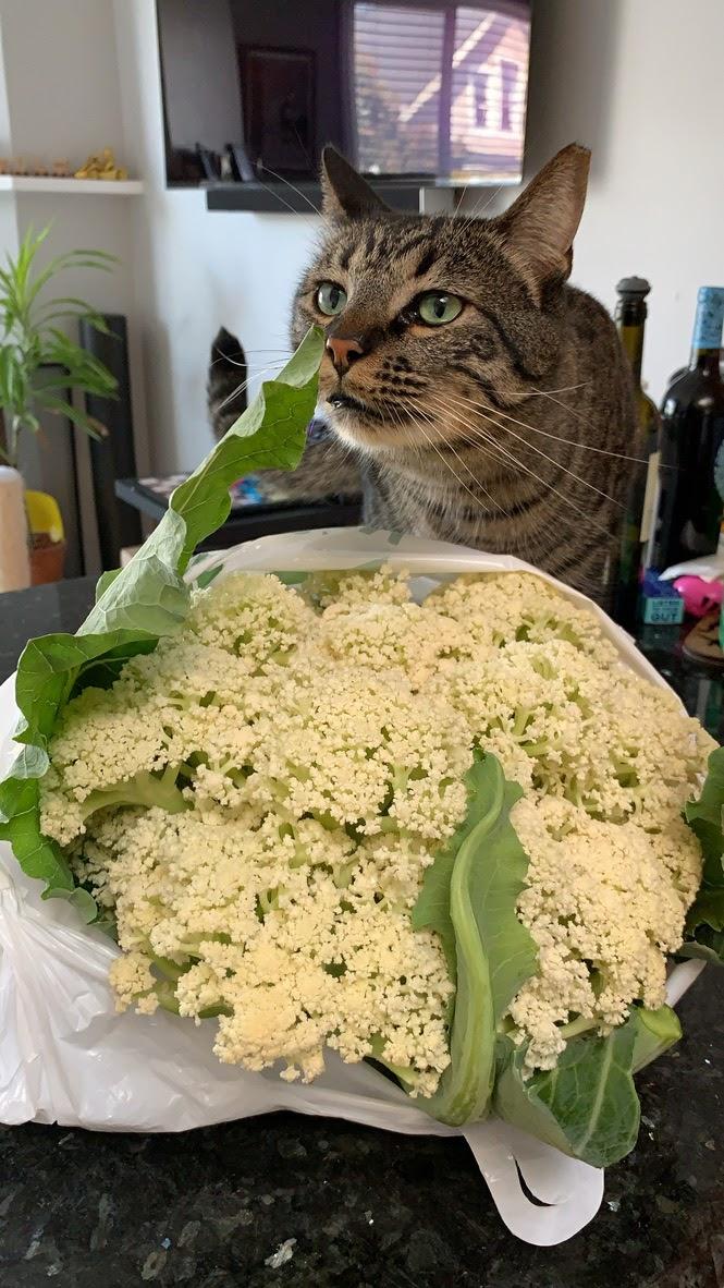 Cat and cauliflower