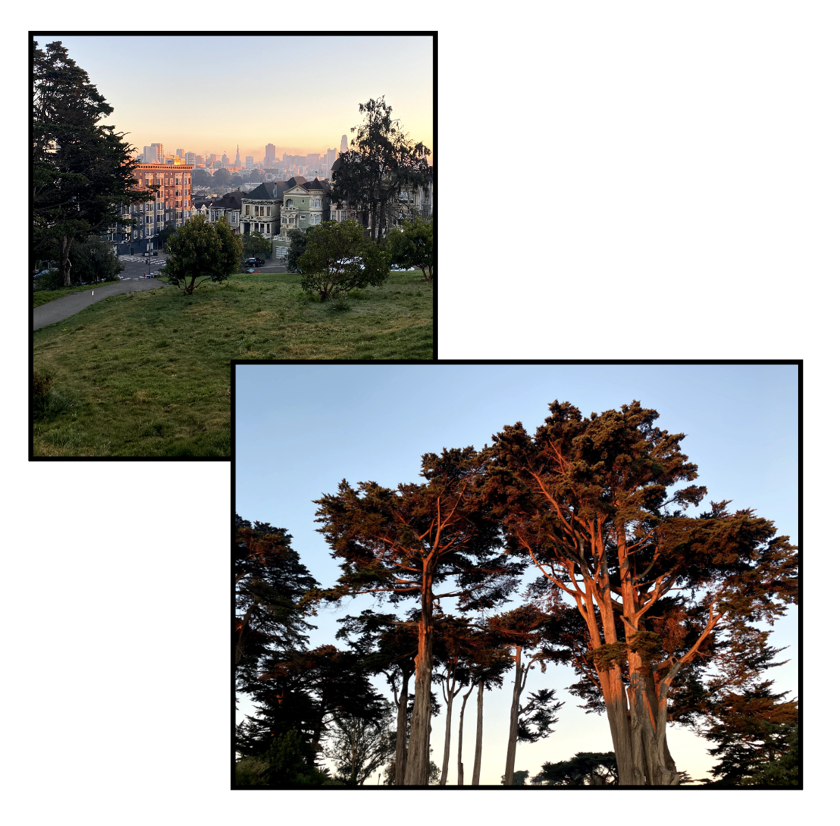 Say what you will about SF, but we have really great trees.