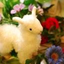 alpaca 【アルパカ】