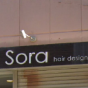 Sora hair design
