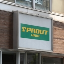 SPROUT 柏