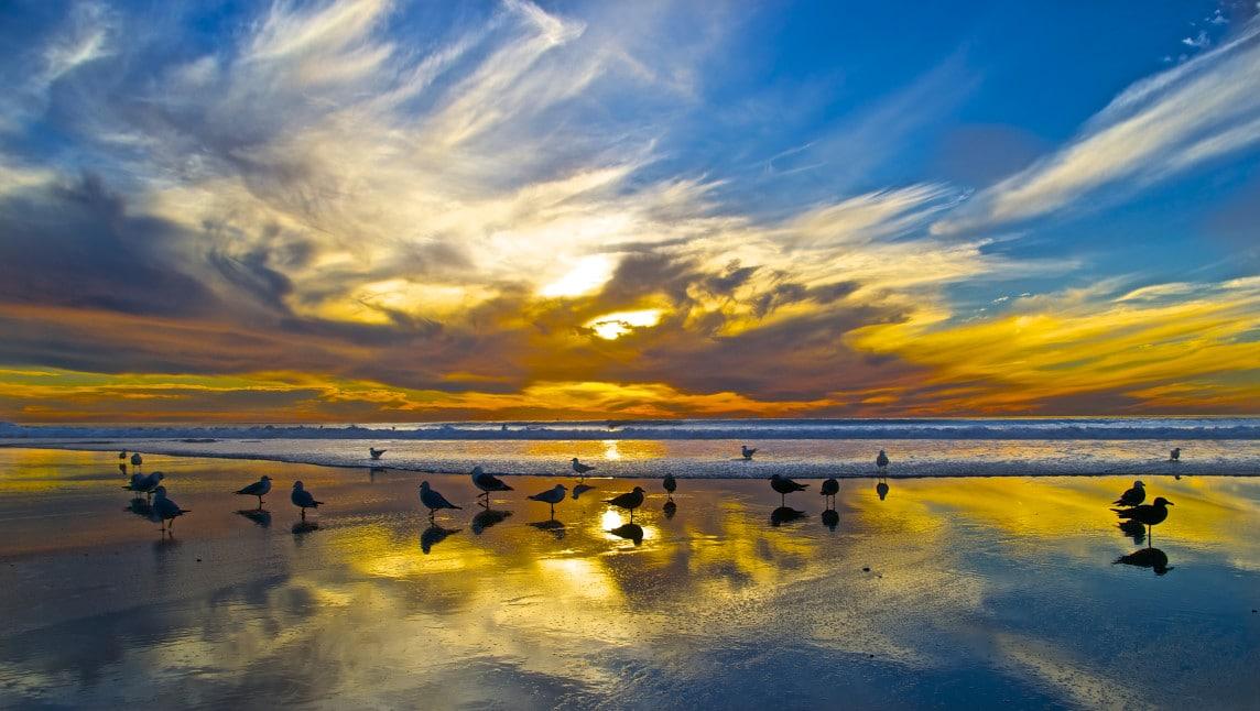 birds on beach at sunset