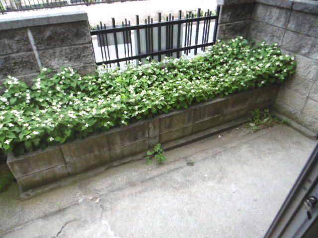 コーポ緑風 100号室の庭