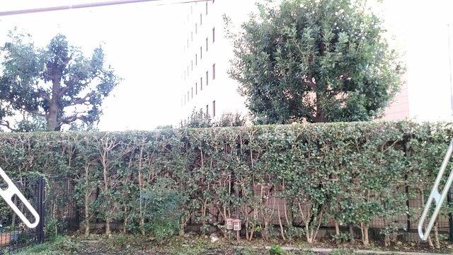 ライオンズスクエア浦和常盤レガリエ 109号室の景色
