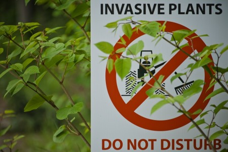 Don't get tied up in knots over knotweed – nip it in the bud}