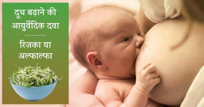 दूध बढ़ाने की आयुर्वेदिक दवा : रिजका या अल्फाल्फा (how to increase breast milk in hindi : alfalfa)
