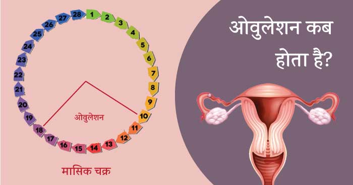 Ovulation Guide - kab hota hai