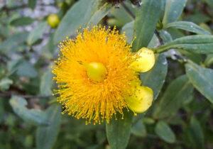 yellow sunburst flower