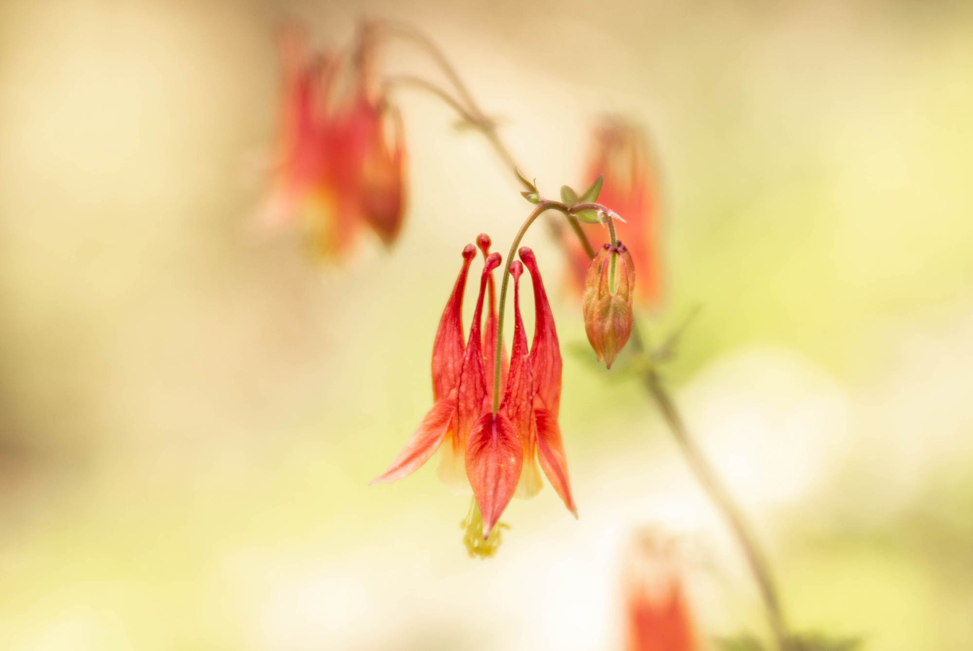 10 Native Tennessee Plants For Your Garden | The Heritage