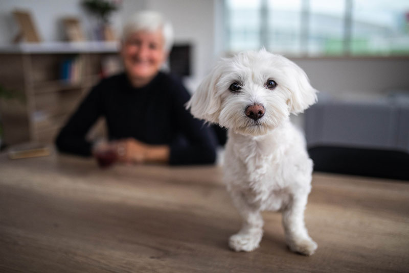 senior woman smiles at her small white dog in the foreground