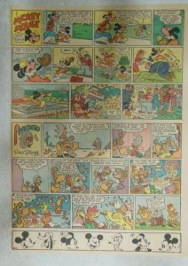 Mickey Mouse Sunday Page by Walt Disney from 5/20/1945 Tabloid Page Size
