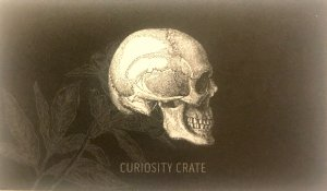 Curiosity Crate
