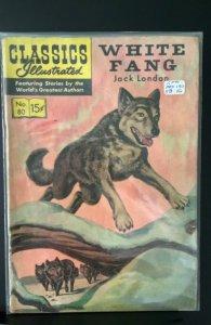 White Fang #80