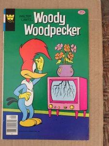 Woody Woodpecker #170