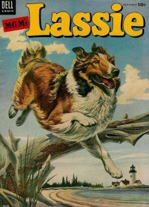 Lassie #17, Good (Stock photo)