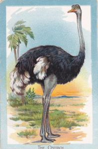 TUCK #402; The Ostrich (Struthio camelus), 00-10s