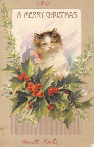 Christmas Cat in holly c1911 ae110 postcard