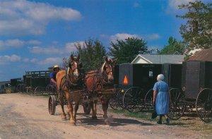 Holmes County Ohio Mt Hope Auction Amish Buggy - Belgian Draft Horses - pm 1996