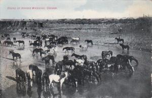 Oregon Round Up Horses Watering