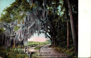 Florida Ormond The Royal Arch Oak On River Road To No 9