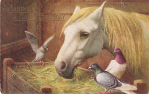Horse and doves Nice vintage Salmon Postcard