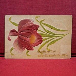 Circa 1909 Greetings From New Cumberland, Ohio Iris Flower Postcard