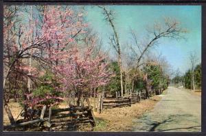 Cedars of Lebanon State Park,Lebanon,TN BIN