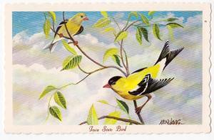 Iowa State Bird, Eastern Goldfinch