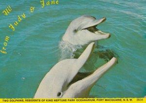 Dolphins , King Neptune Park Oceanarium , MACQUARIE , N.S.W. , Australia , 50...